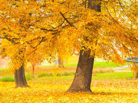 szeptember: fall elhagyja fákkal