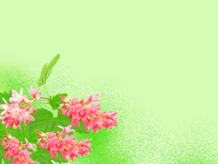 room for text: Flowering red Currant (Ribes sanguineum), on green background, with room for text