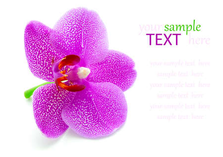 orchid on white background  photo