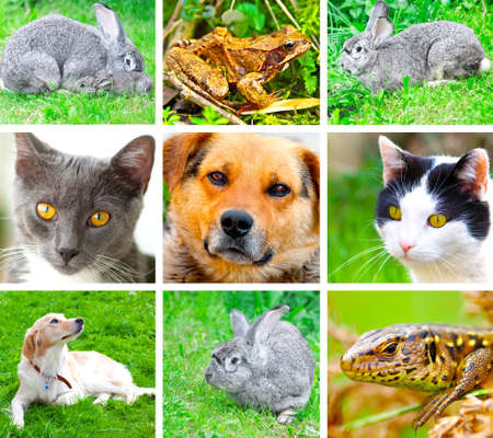 reptilia: Collage of animals images. ( cat, dog, lizard, frog, rabbit ) Stock Photo