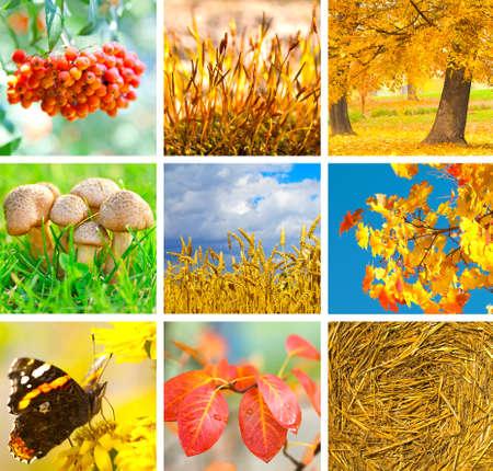 秋の別の写真を示す秋のコラージュ