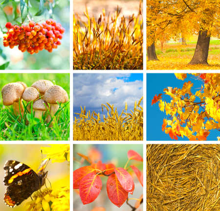 Autumn collage showing different autumn pictures  photo