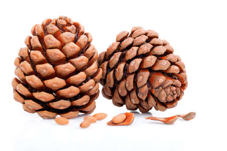siberian pine: Ripened cone with pine nuts on white  Stock Photo