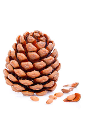 Ripened cone with pine nuts on white  photo