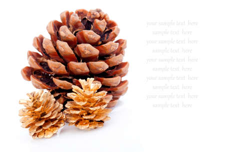 Ripened cone with pine nuts on white, with room for text  photo