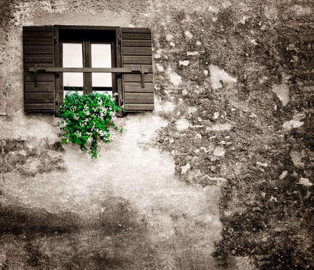 花はシャッターで古いウィンドウにハングアップします。