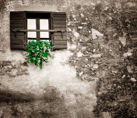 flowers hangs on the old window with a shutter Stock Photo - 11187787