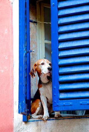 犬と一緒に古いウィンドウ