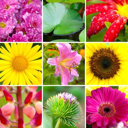 Summer assortment flowers Stock Photo - 12052067