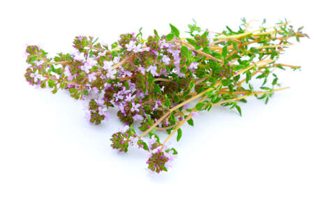thyme on white isolated background