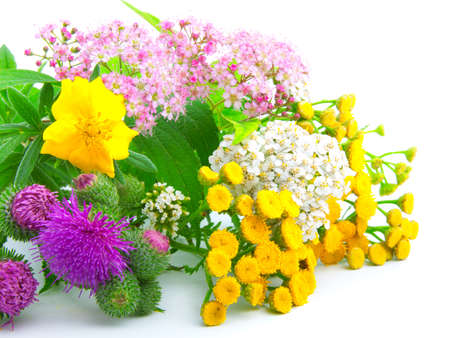 a bouquet of wildflowers,  on white background photo