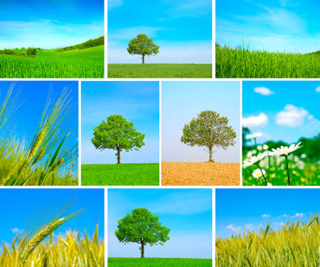 assortment of spring and summer landscape - green tree on the blue sky, green field, wheat harvest, chamomill photo