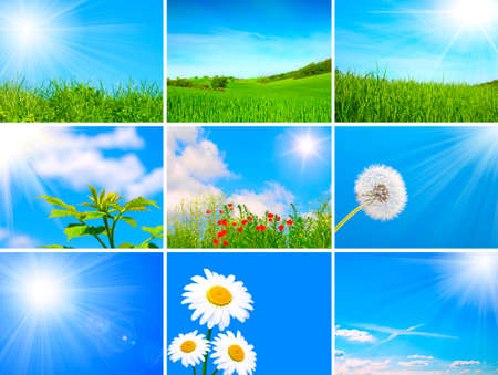 assortment of spring and summer landscape - green blooming field on blue sky, agriculture field, dandelion, green sprout, camomile, sunlight photo