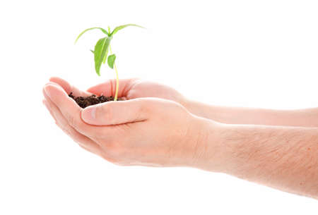 Green plant in a man hand isolated on white background photo