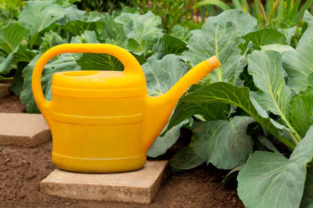 yellow watering can in vegetable garden photo