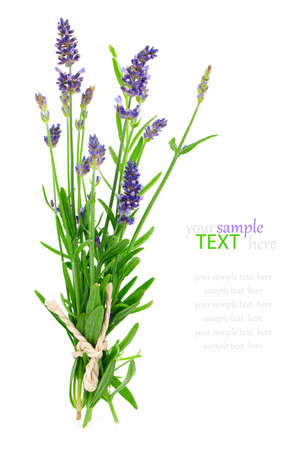 bunch of lavender on a white background photo