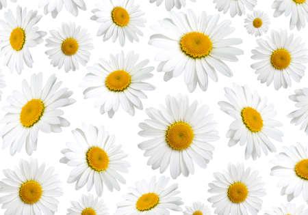 白い背景の上、カモミールの花のテクスチャ 写真素材