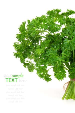 Fresh green parsley, isolated on white background Stock Photo - 15139169