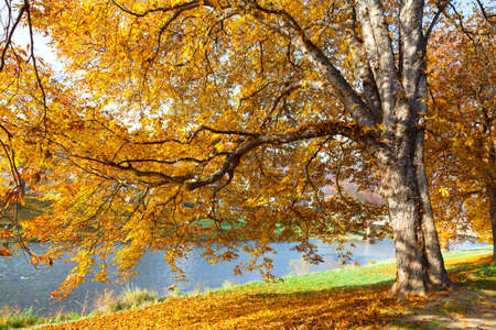 saturate: fall leaves trees