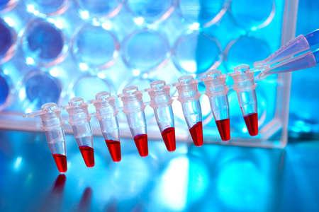 amplification: Sripe de tubes en plastique avec des �chantillons pour l'analyse de l'ADN. �chantillons  sang pour la recherche dans des microtubes