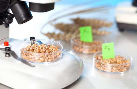 Corn Hybrid Selection genetischen Biotechnologie