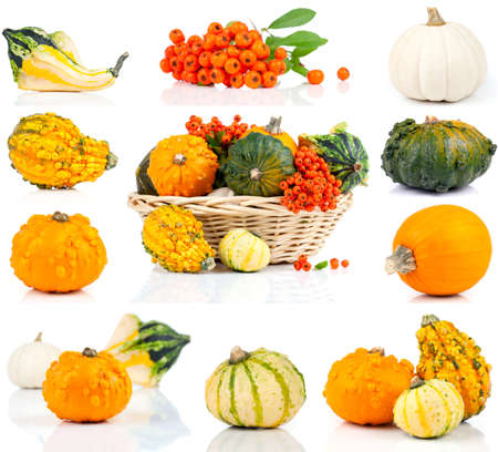 set of autumn pumpkins, isolated on the white background photo