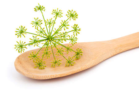 dill seed: inflorescence of fresh dill on wooden spoon, on white background