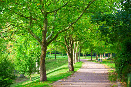 Pedestrian walkway for exercise lined up with beautiful tall trees photo