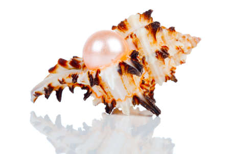 Big pearl in shell, isolated on a white background Stock Photo - 18514064