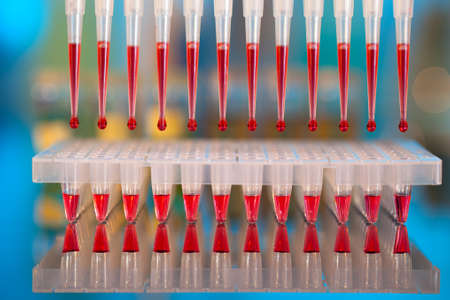 sequencing: DNA analysis: loading reaction mixture into 96-well plate with multichannel pipette Stock Photo