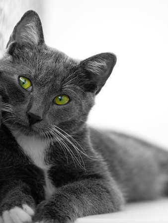 green-eyed cat photo