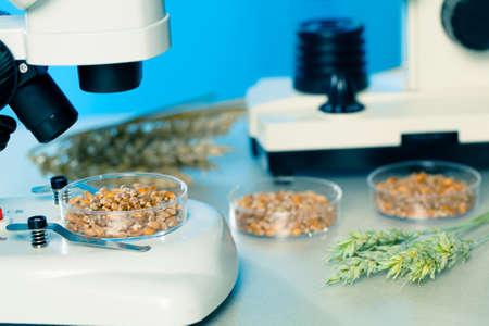 食品の品質用微生物試験 写真素材 - 19327949