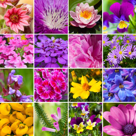 collage from different kind of flowers photo
