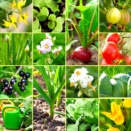 vegetable garden collection photo