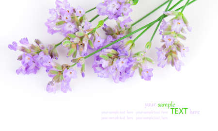 a bunch of lavender flowers on a white background Stock Photo - 20162018