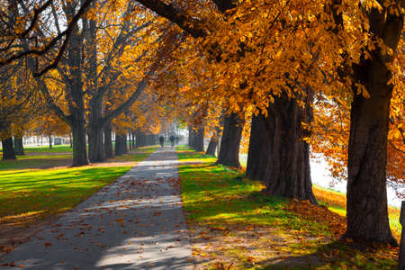 Pedestrian walkway for exercise lined up with beautiful tall autumn trees photo