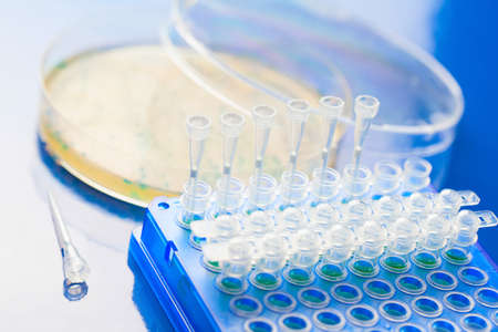Bacterial colony picking for DNA cloning Stock Photo - 20724483