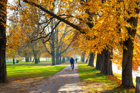 pedestrian walkway: Pedestrian walkway for exercise lined up with beautiful fall trees