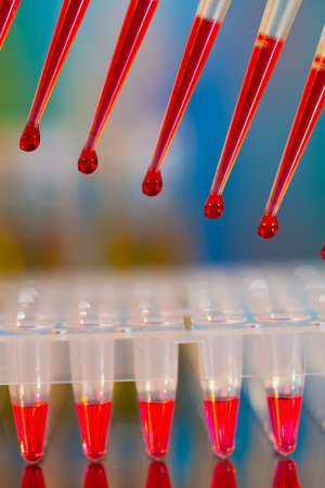 DNA analysis: loading reaction mixture into 96-well plate with multichannel pipette photo