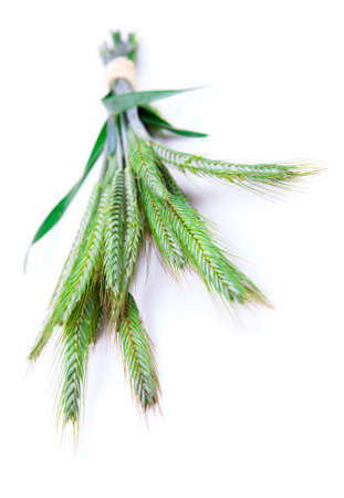 Green rye spikes (Secale cereale), on white background. photo