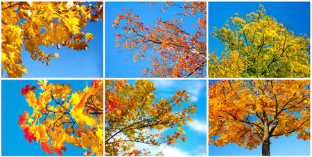 autumn tree on blue sky. set photo