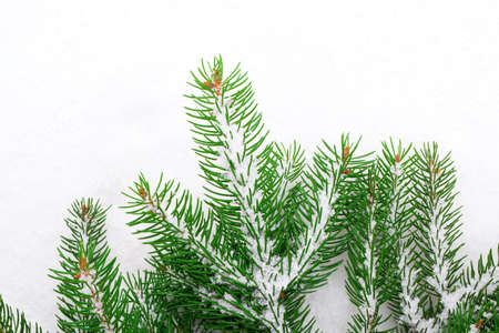Christmas tree with snow, isolated on white background photo