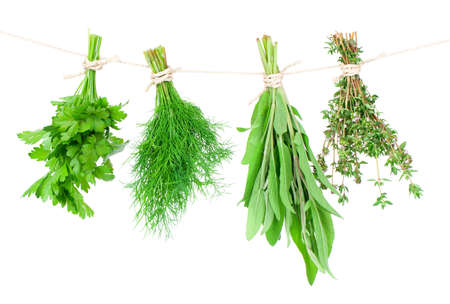 cebollin: Hierbas frescas colgando aislados sobre fondo blanco