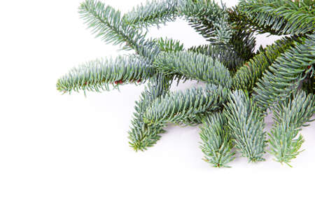 Branch of Christmas tree on white background photo