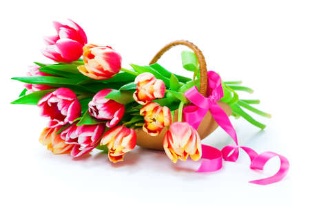 Bunch of red-yellow tulips in a basket on white background, photo