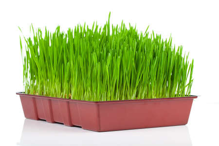 Green grass. Isolated, over white background photo