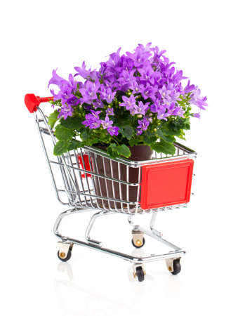 blue campanula flowers in a Shopping cart, on white background photo