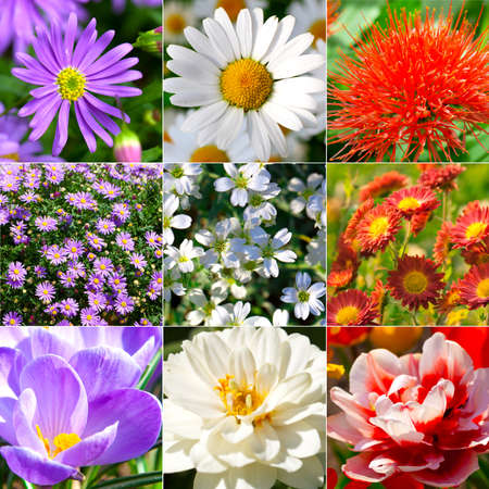 collection of different flowers - Camomile, Gypsophila repens, crocus, chrysanthemum, dahlia, photo