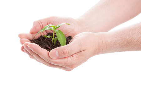 ecosavy: green seedling in male hands, isolated on a white background