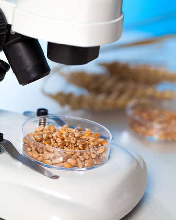 Microbiological Testing for Food Quality photo